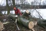 U Šlajzy v Kroměříži se kácely staré a nemocné stromy